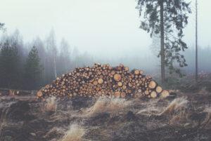 Zukunft mobiler Forst