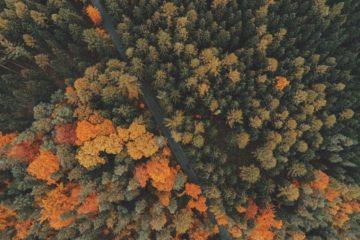 Vogelperspektive Wald