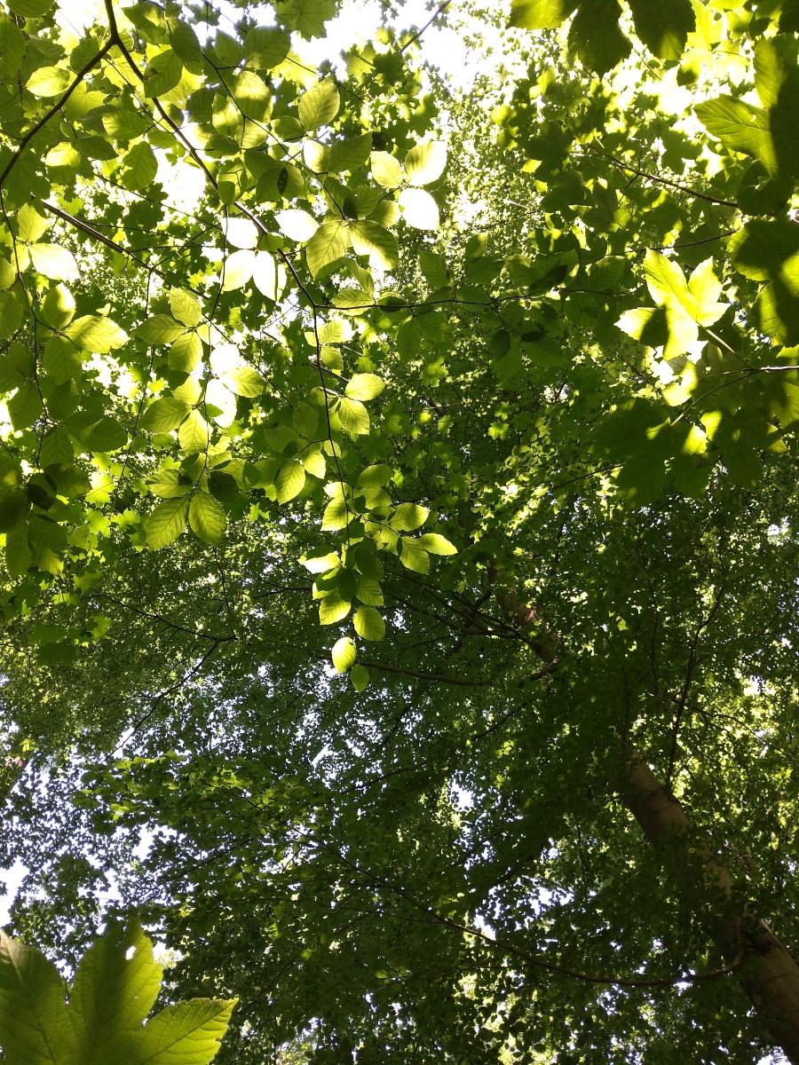 dichter Blätterbewuchs